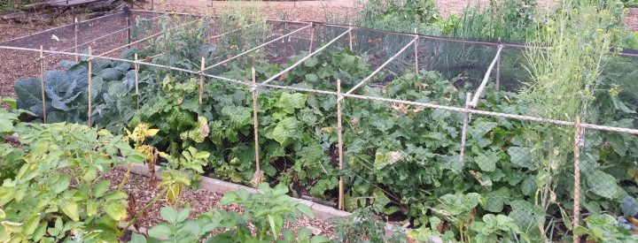 Image of Brockwell Park Community Greenhouses